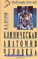 Клиническая анатомия человека