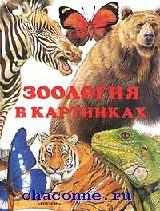 Зоология в картинках
