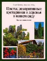 Цветы, декоративные кустарники и деревья в нашем саду