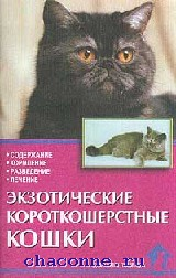 Экзотические короткошерстные кошки. Стандарты
