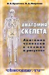 Анатомия скелета. Анатомия человека в схемах и рисунках