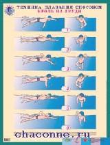 Техника плавания способом кроль на груди