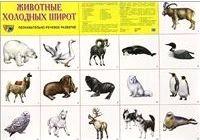Плакат Животные холодных стран