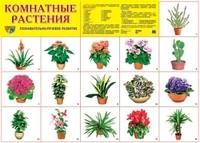 Плакат Комнатные растения