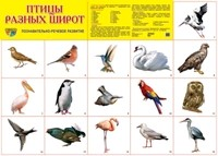 Плакат Птицы разных широт