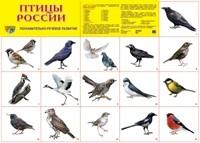 Плакат Птицы России
