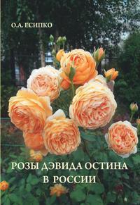 Розы Дэвида Остина в России